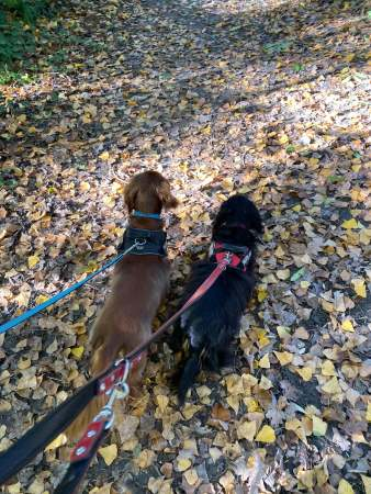 Puppies on a walk - Weekend Wrap-up - (un)Conventional Bookworms