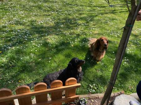 Puppies in the yard - (un)Conventional Bookworms - Weekend Wrap-up