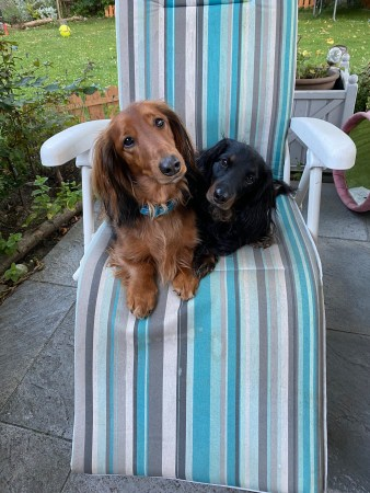 Puppies on lounge chair - looking like a heart - (un)Conventional Bookworms - Weekend Wrap-up