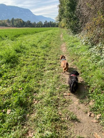 Stroll in the field - (un)Conventional bookworms - Weekend Wrap-up