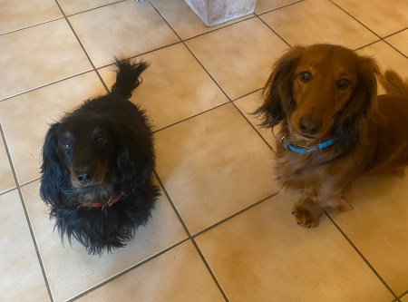 Puppies want a snack - (un)Conventional Bookworms - Weekend Wrap-up