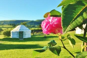 Barnutopia- Yurt Rose