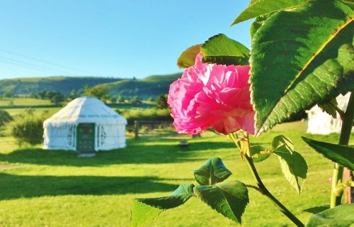 Barnutopia- Yurt Rose (1000x667)1525867812