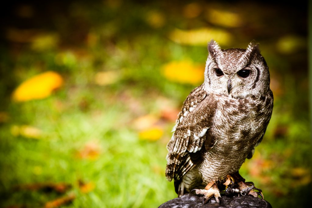 Wedding Owl- Unconventional Wedding- Harry Potter WeddingLumiere Photography 2