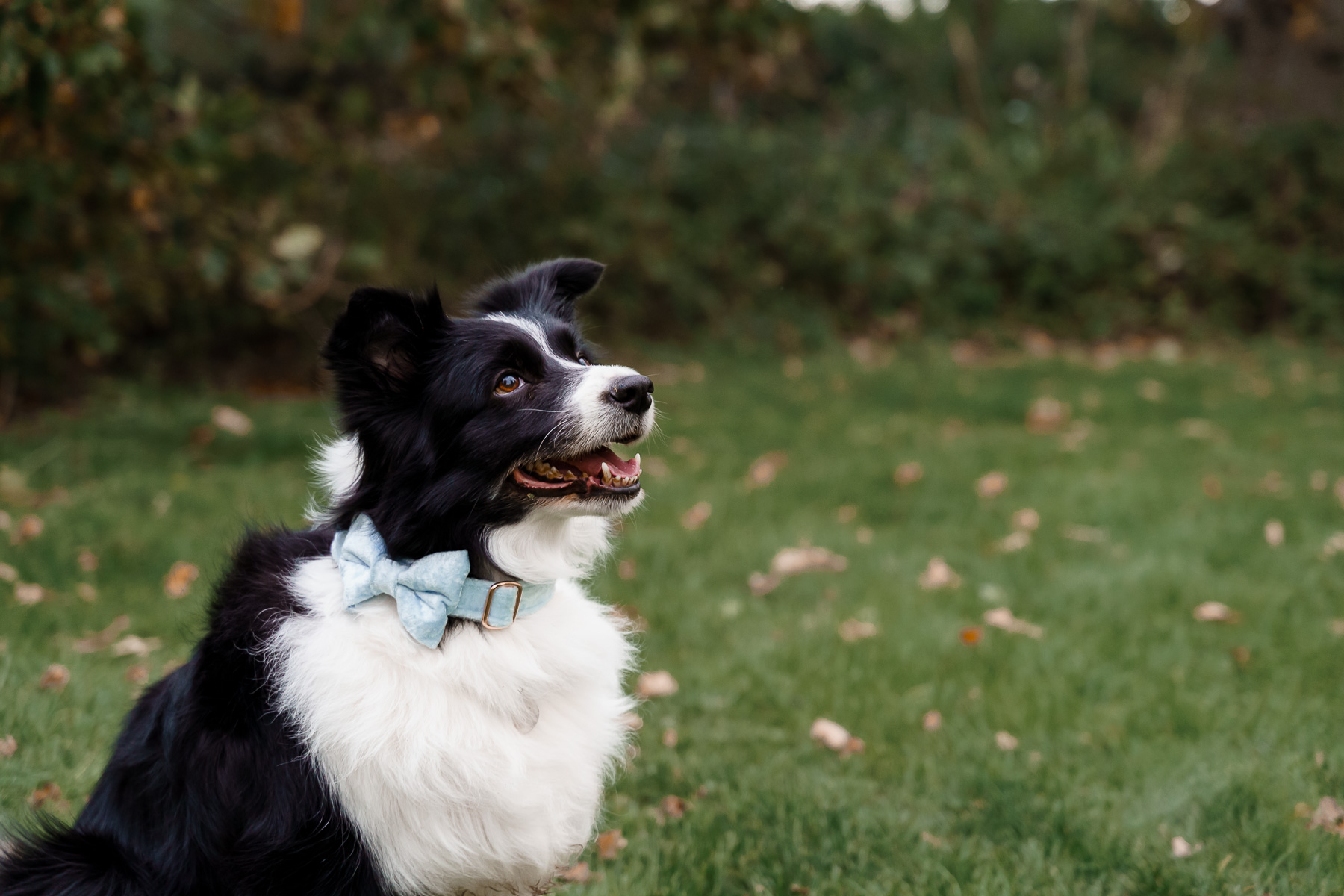 dog friendly wedding- dogs at weddings- katherine and her camera- dog wedding accessories-unconventional wedding- wedding planning advice- pets at weddings- dog bowtie