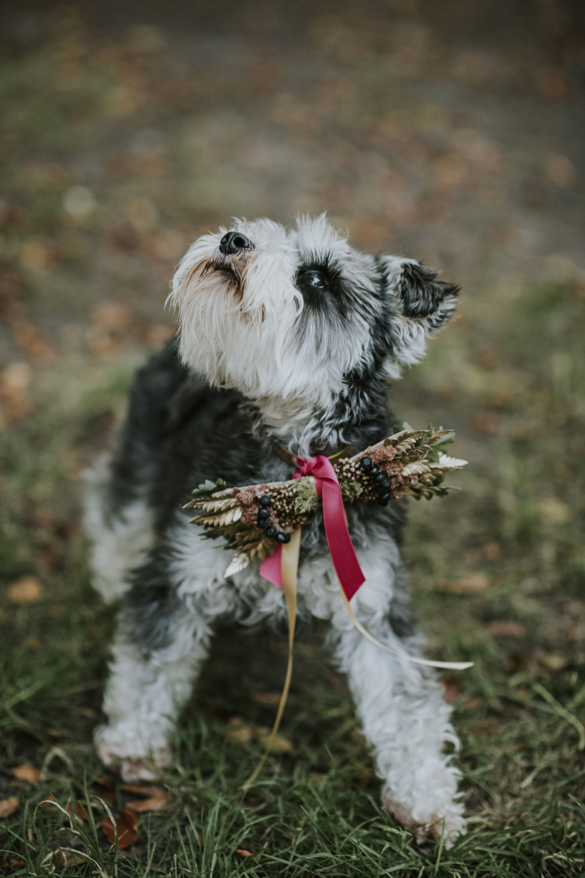 dog at wedding with floral bowtie