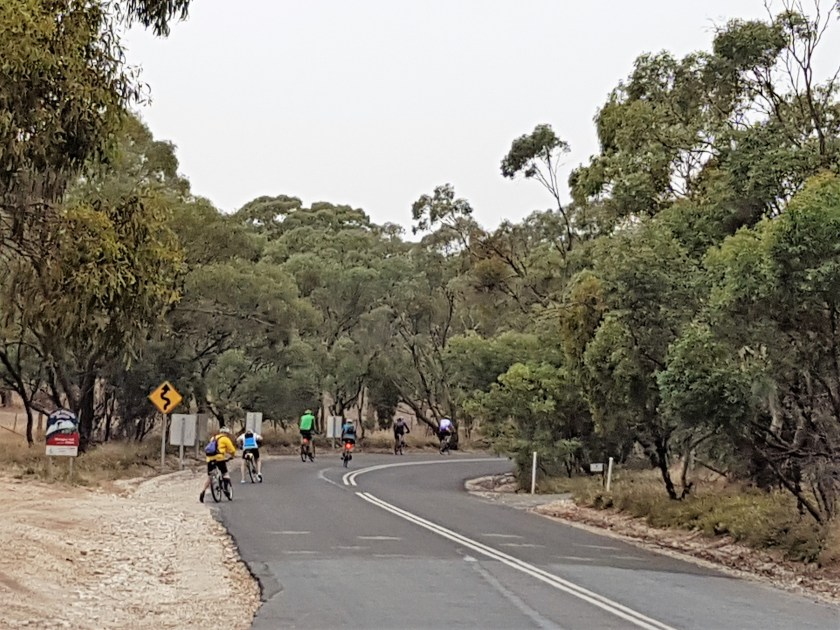 Barossa cycling - The stronger riders head off up Menglers Hill Road