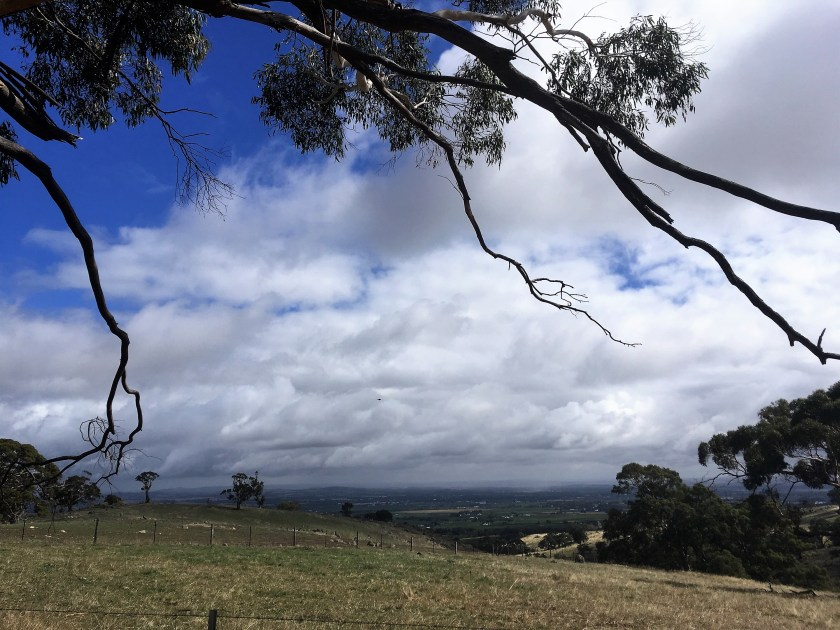 Barossa cycling - the view from Menglers Hill - photo by Damien Henderson