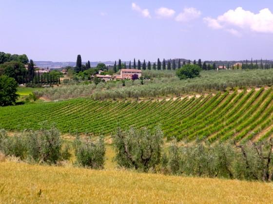 Pacina fields