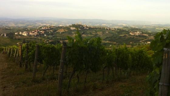 vineyards San Gim
