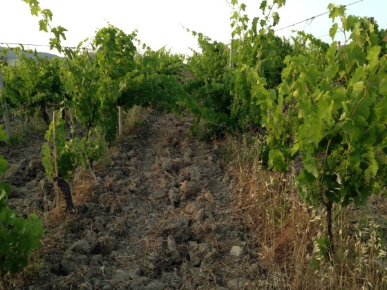 soil vineyard