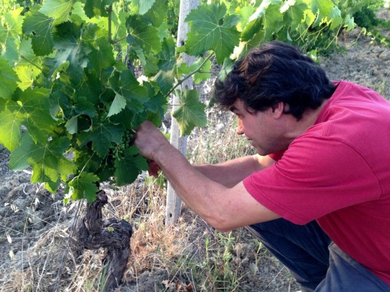 with old vine