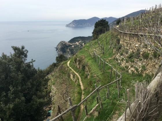 vineyard hillside sea
