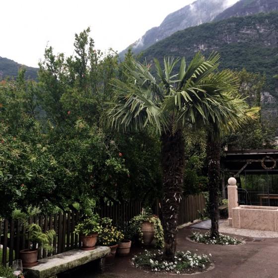 palms with mounts Foradori