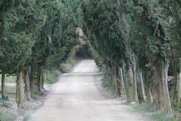 """The """"white road"""" to Vagliagli"""