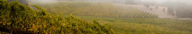Coastal fog envelopes Talley Vineyards in Arroyo Grande