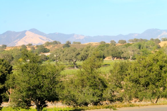 Santa Ynez Valley stretches east to west making it an ideal Mediterranean climate