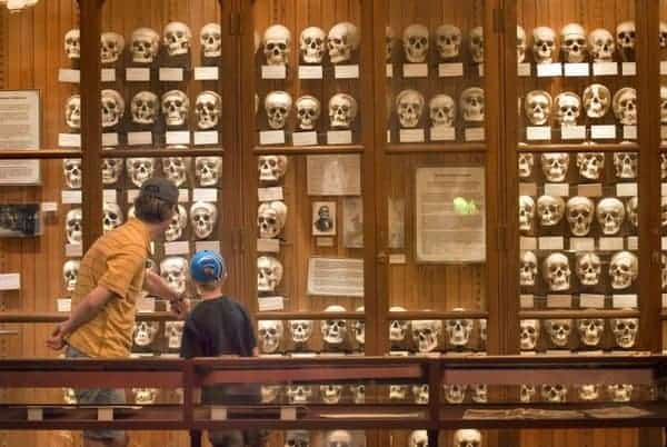 A wall of human skulls greets you at the entrance to the Mütter Museum in downtown Philadelphia, Pennsylvania.