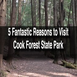 Reasons to Visit Cook Forest State Park in Pennsylvania