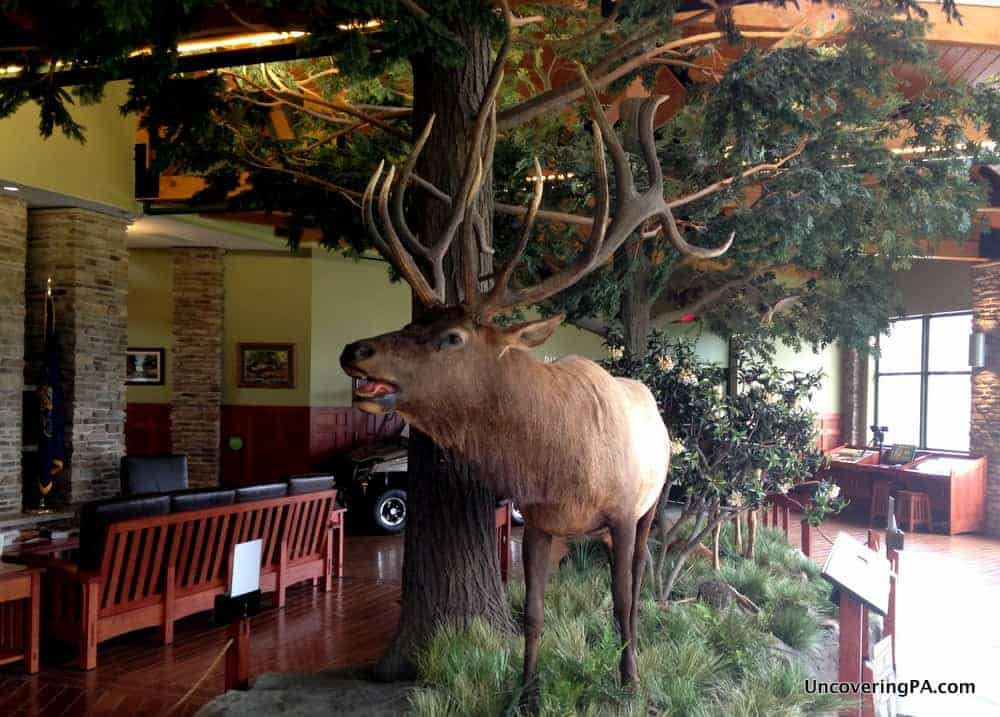 Visiting the Elk County Visitor Center in Benezette, Pennsylvania.