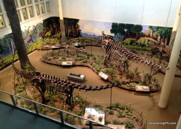 Overlooking several large dinosaur fossils at the Carnegie Museum of Natural History in Pittsburgh, Pennsylvania.