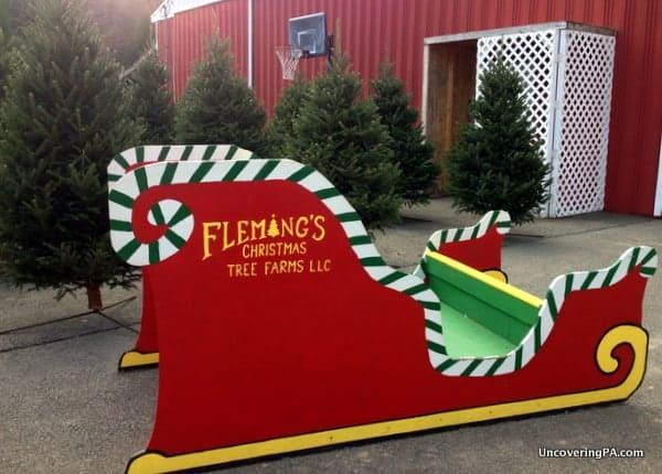 Fleming's Christmas Tree Farm in Indiana County, Pennsylvania.