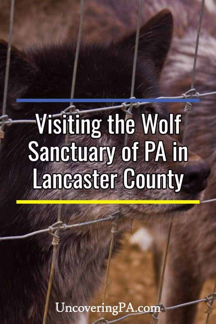 Visiting the Wolf Sanctuary of PA in Lancaster County, Pennsylvania
