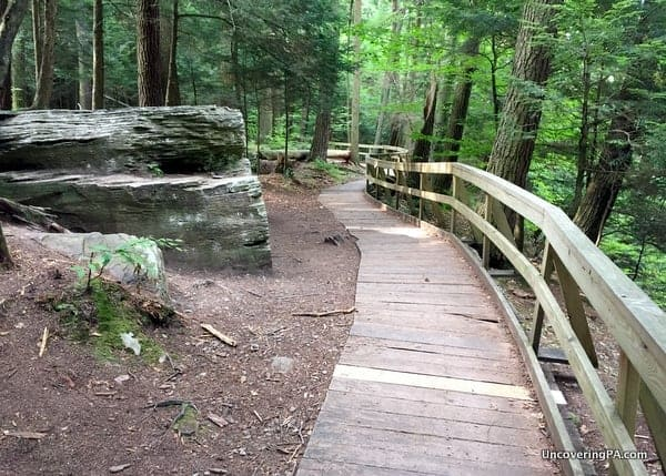 The boardwalk that makes up part of the Hemlock Trail in Salt Springs State Park.