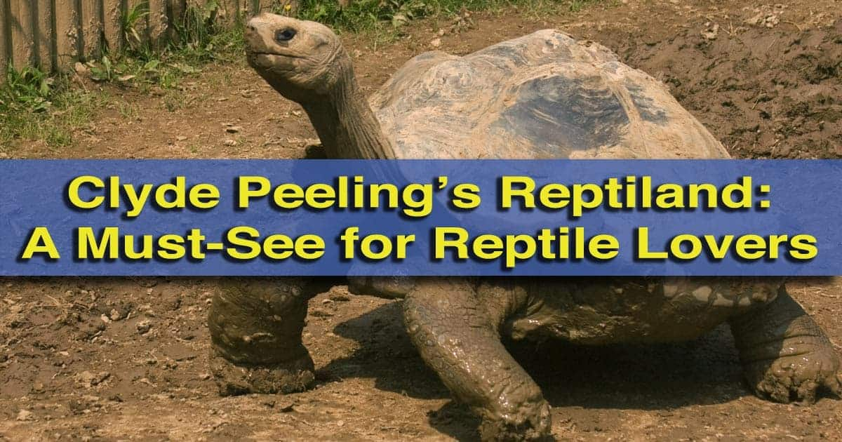 Visiting-Clyde-Peelings-Reptiland-in-PA