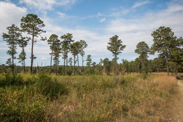 Visiting the Nottingham Serpentine Barrens in southeastern Pennsylvania