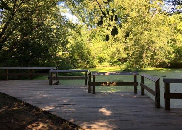 Visiting the Tyler Arboretum pond.