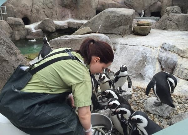Penguin feeding at the National Aviary in Pennsylvania.