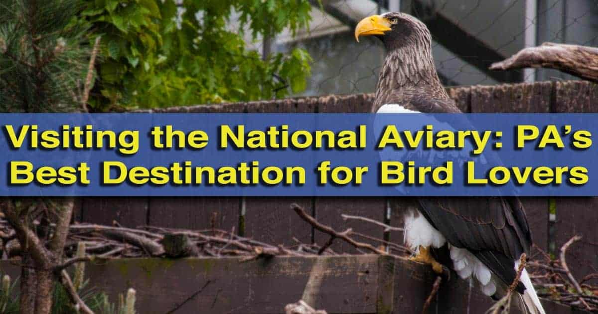 Visiting the National Aviary in Pittsburgh, Pennsylvania