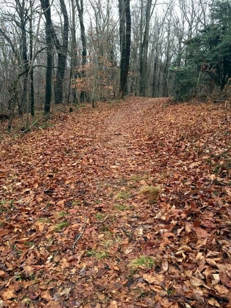 Trail in State Game Lands 181 in York County, PA