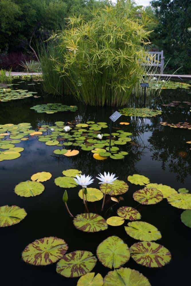 Garden Pond Ideas Small Gardens
