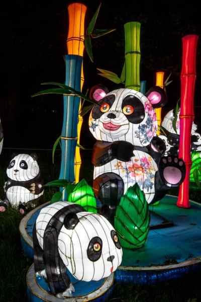 Panda lantern at the festival in philadelphia