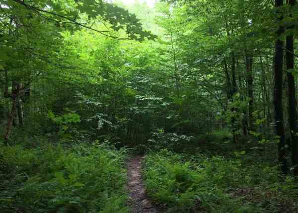 Trail to Logan Falls in Marienville, PA