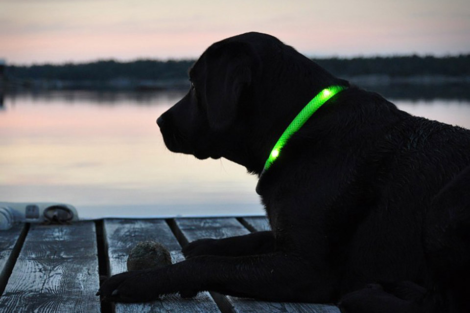 Glowdoggie LED Dog Collars