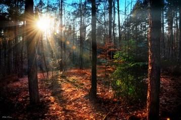 """Sunset"" Image Courtesy and Copyright Viktor Korostynski"