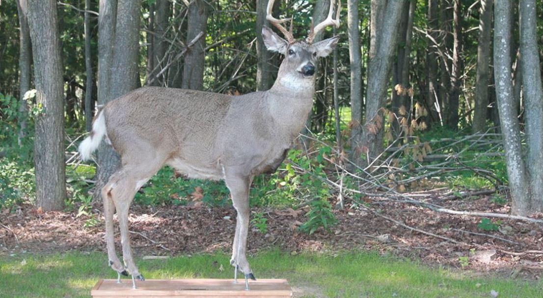 Best Deer Decoy — 2017 Reviews And Top Picks
