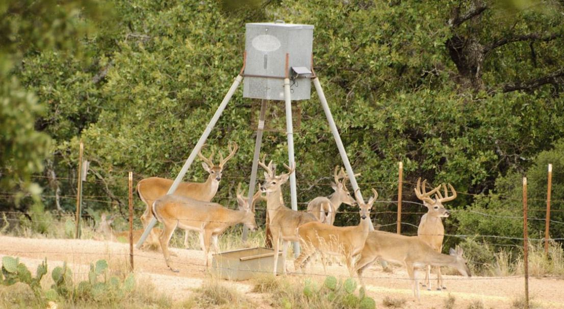 profile fill standandfill filling broadcast easy stand to and feeders low steel feeder deer protein all seasons products