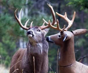 effective deer decoy