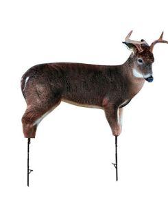 The Freshman Whitetail Buck by Montana Decoy