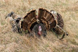 Stalking Turkey Decoy