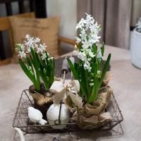 Alla dessa vackra lökväxter, en försmak av våren!
