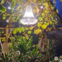 Kväll i mitt växthus!