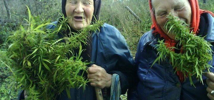 OLD PEOPLE MARIJUANA VIDEOS  Underground Cannabis