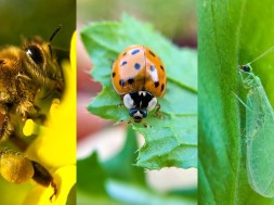 To Help Insects, Make Them Welcome in Your Garden – Here's How
