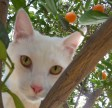 orange tree in the back with resident wildlife