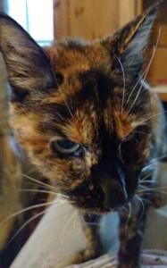 Rosie-closeup